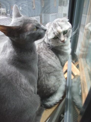 2008_0603猫写真0005
