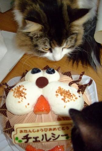 2007_1212猫写真0018