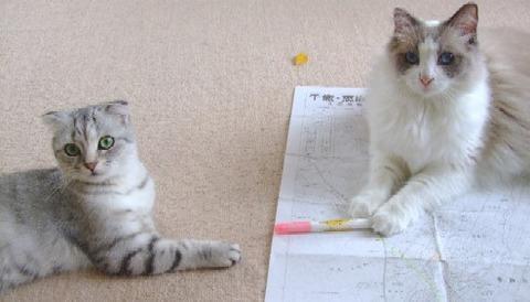 2007_0715猫写真0022
