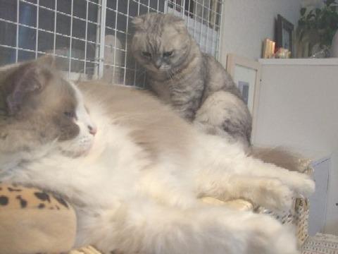 2008_0207猫写真0041