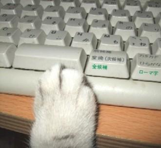 2007_0527猫写真0038