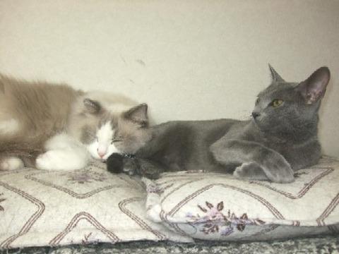 2007_1231猫写真0004