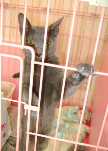 2007_1004猫写真0001