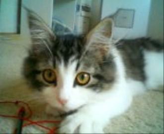 チェルシー子猫5