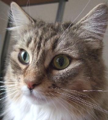 「猫だらけ」つみき3_1