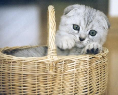 猫パンチTVマリン子猫