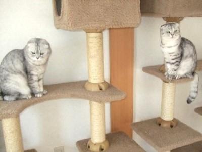 2008_0120猫写真0045