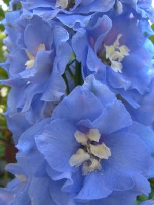 花カレンダー22