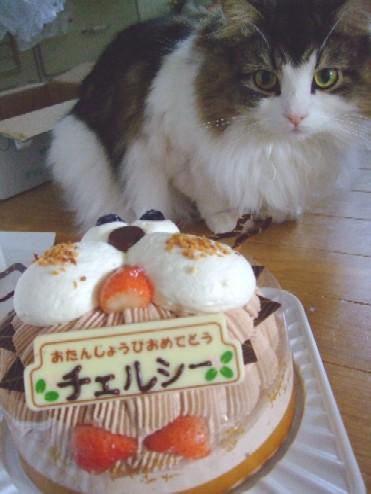 2007_1212猫写真0022
