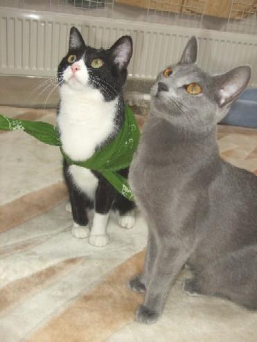 2008_0331猫写真0034