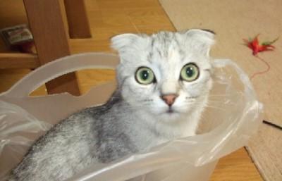 2007_0601猫写真0026
