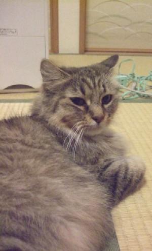 2008_0209猫写真0005
