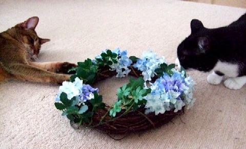 2007_0410猫写真0012