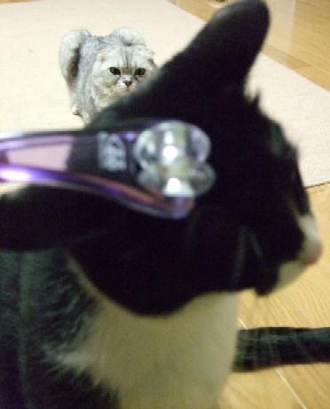 2007_0405猫写真0006
