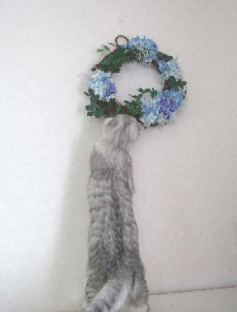 2007_0411猫写真0016