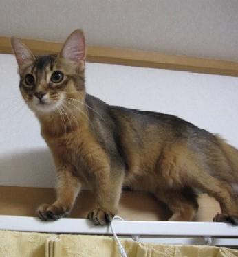 しおり猫パンチTV