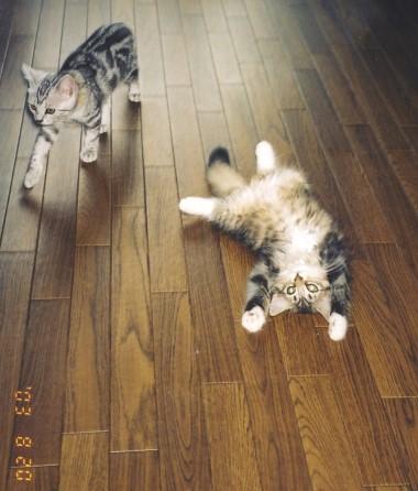 つみき子猫