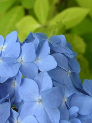 花カレンダー28