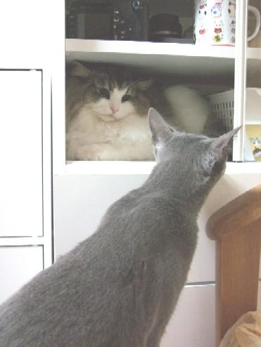 2008_0327猫写真0034