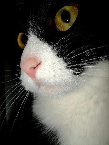 2007_0610猫写真0002