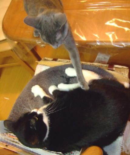 2007_1127猫写真0020