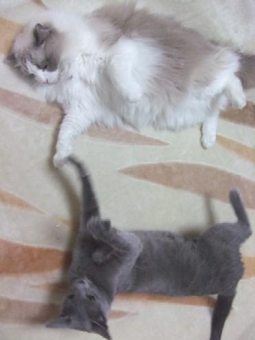 2008_0327猫写真0022