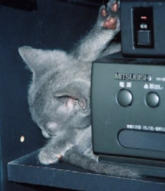 ルシ子猫1