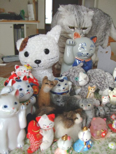 2007_0930猫写真0006