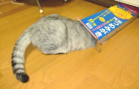 2007_0801猫写真0033