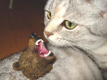 2007_0829猫写真0054
