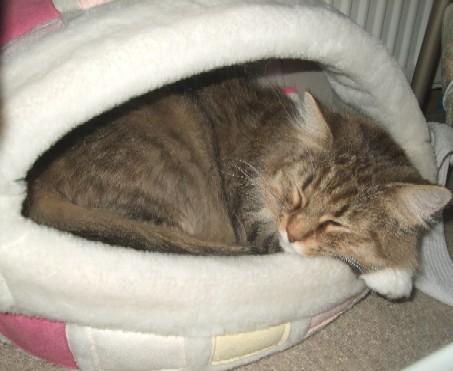 2008_0219猫写真0008
