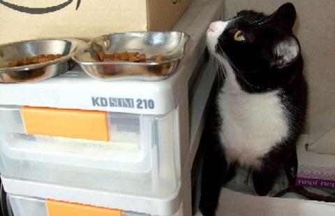 2007_0417猫写真0005