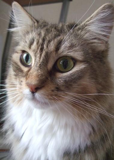 「猫だらけ」つみき応募写真