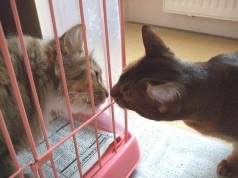 2008_0202猫写真0061
