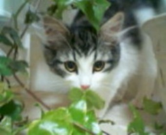 猫パンチTVチェルシー子猫