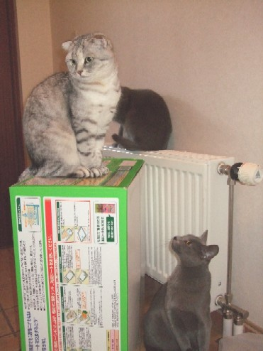 2008_0401猫写真0022