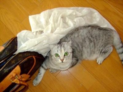 2007_0810猫写真0024