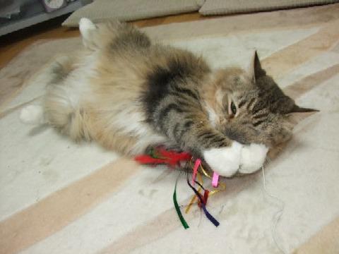 2008_0513猫写真0100