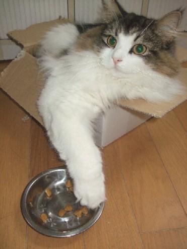 2007_1219猫写真0034