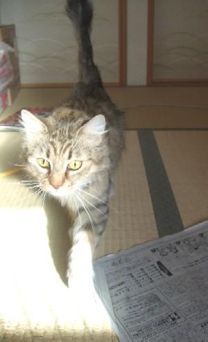 2008_0203猫写真0001