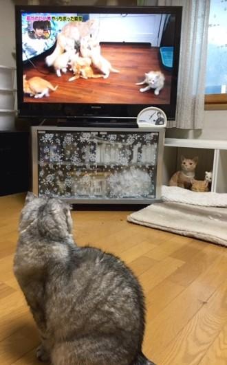 こまりテレビ