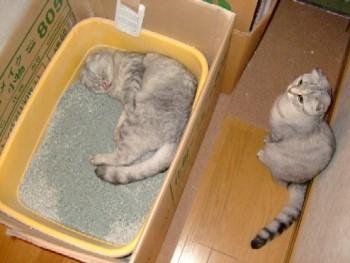 2007_0719猫写真0077