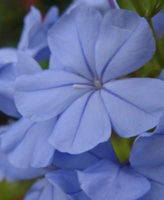 花カレンダー33