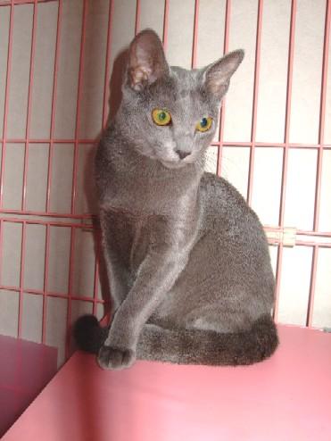 2007_0930猫写真0108