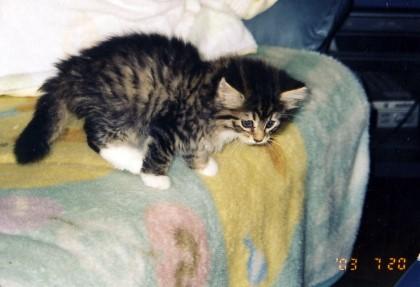 つみき子猫1