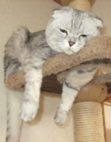 2007_0516猫写真0064