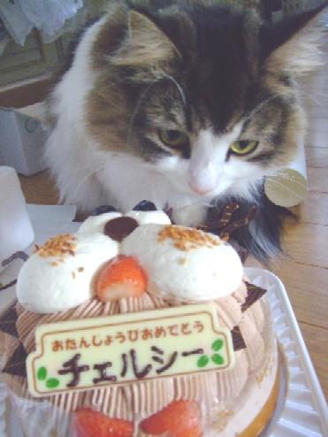 2007_1212猫写真0020