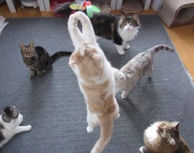 猫だらけの写真3