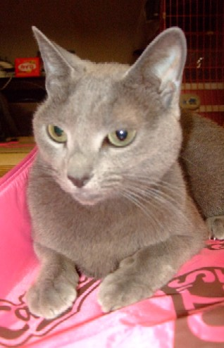 2007_1113猫写真0042
