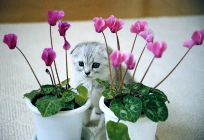 マリン子猫
